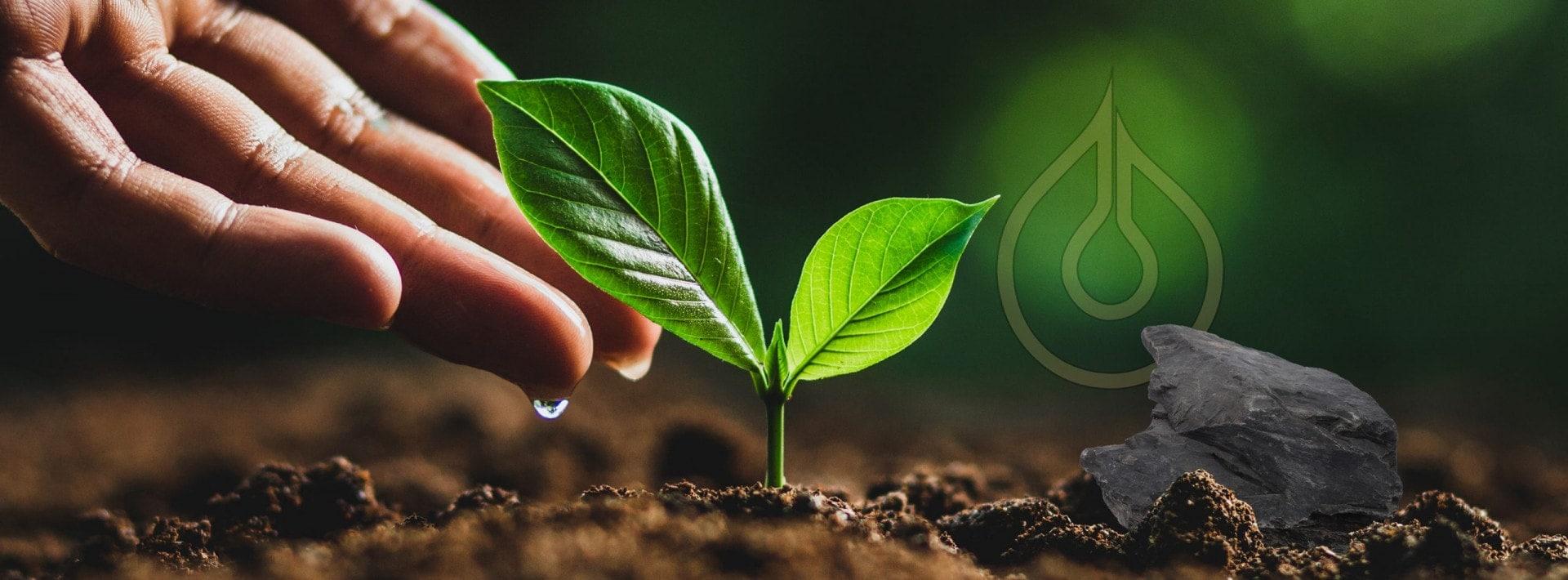 Nachhaltigkeit HP scaled